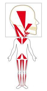 CMD, Craniomandibuläre Dysfunktion
